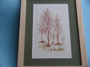 Red poplars all
