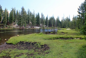 Tioga meadow